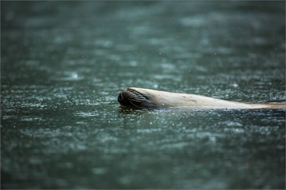 Upside-down seal - 2013 © Christopher Martin