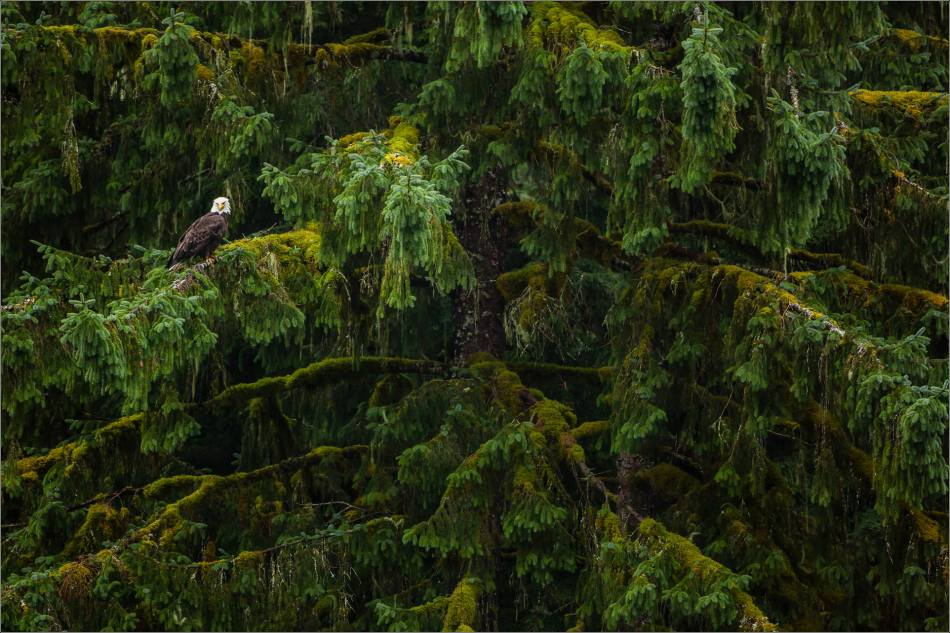 In the rainforest - 2013 © Christopher Martin
