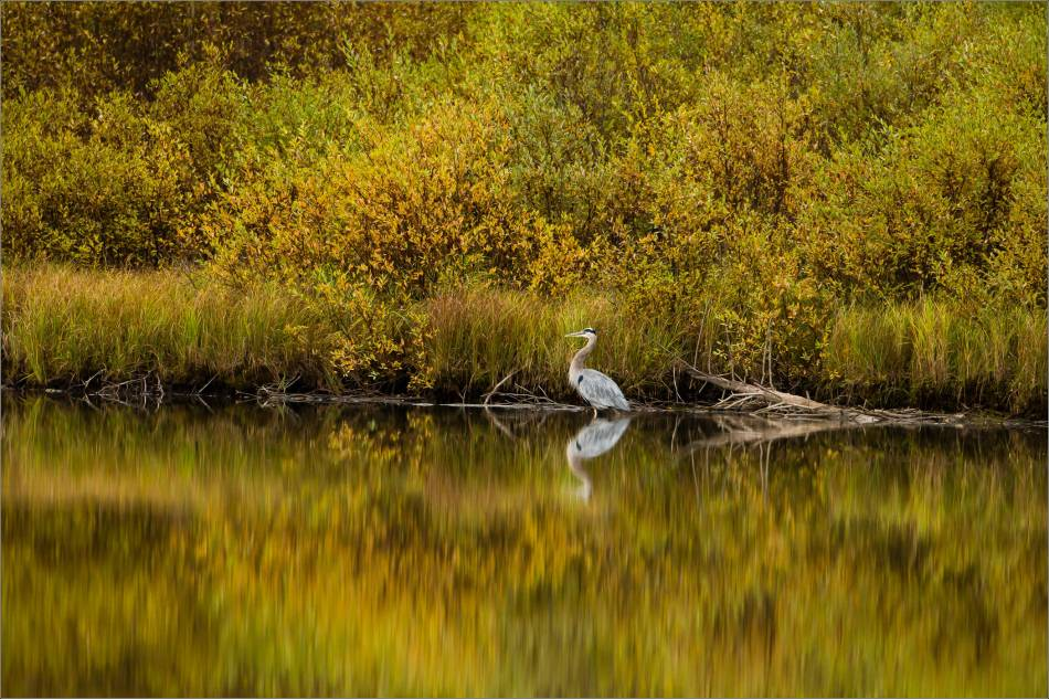 Fishing in the shallows - 2013 © Christopher Martin