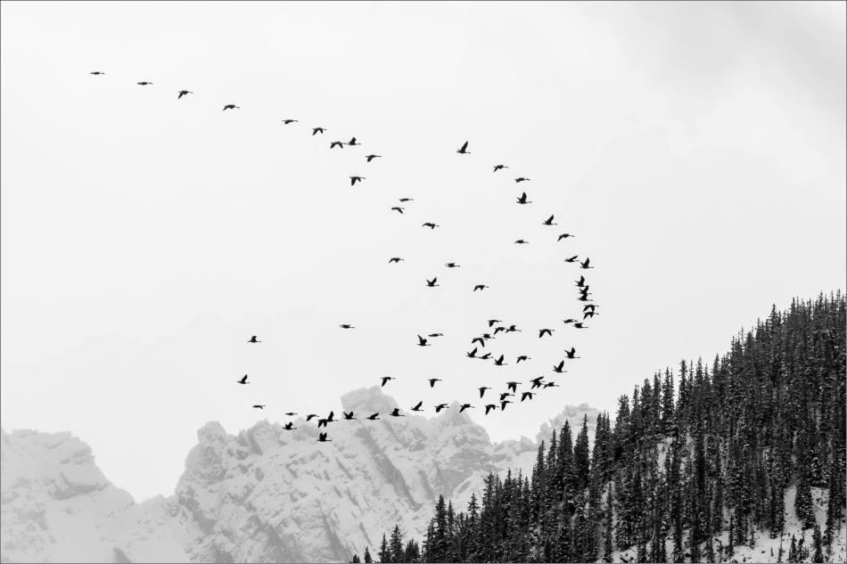 Rocky migration - 2013 © Christopher Martin