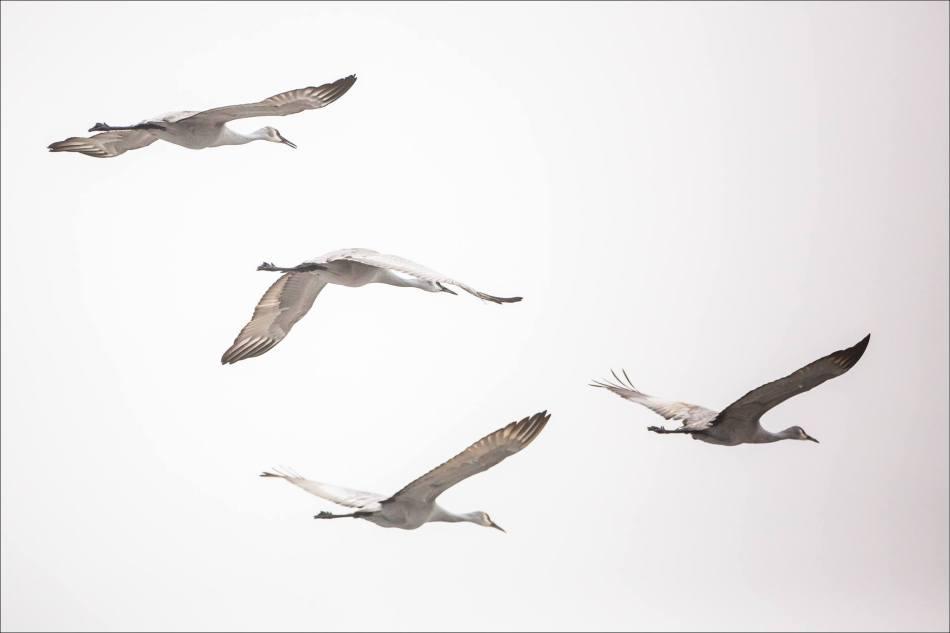 Crane Flight - 2013 © Christopher Martin