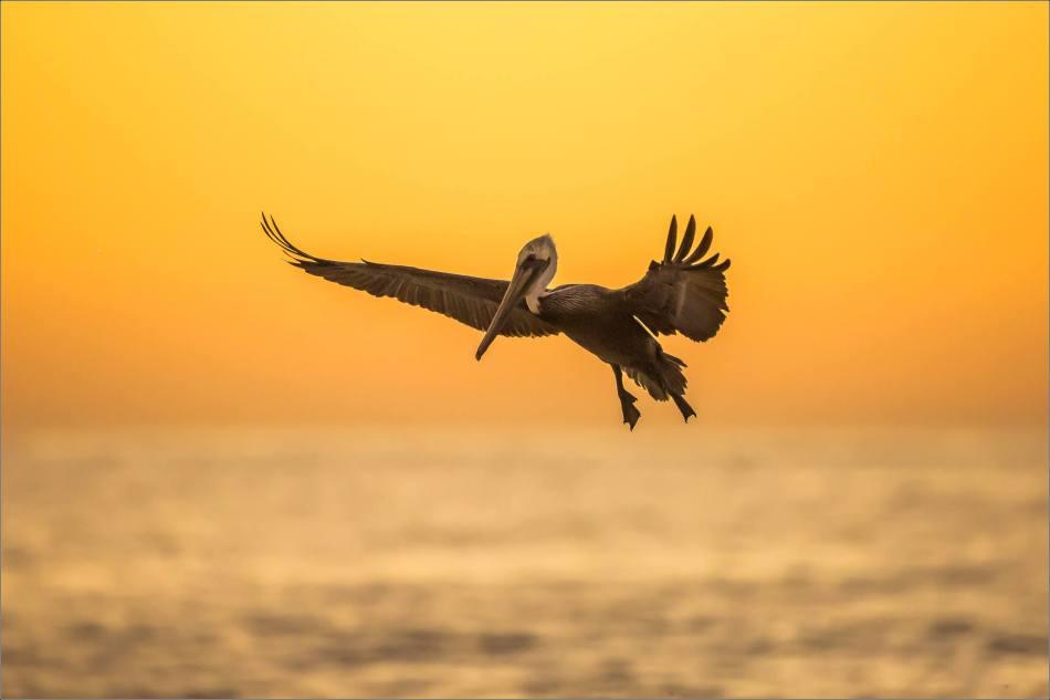 Dawn landing - 2013 © Christopher Martin