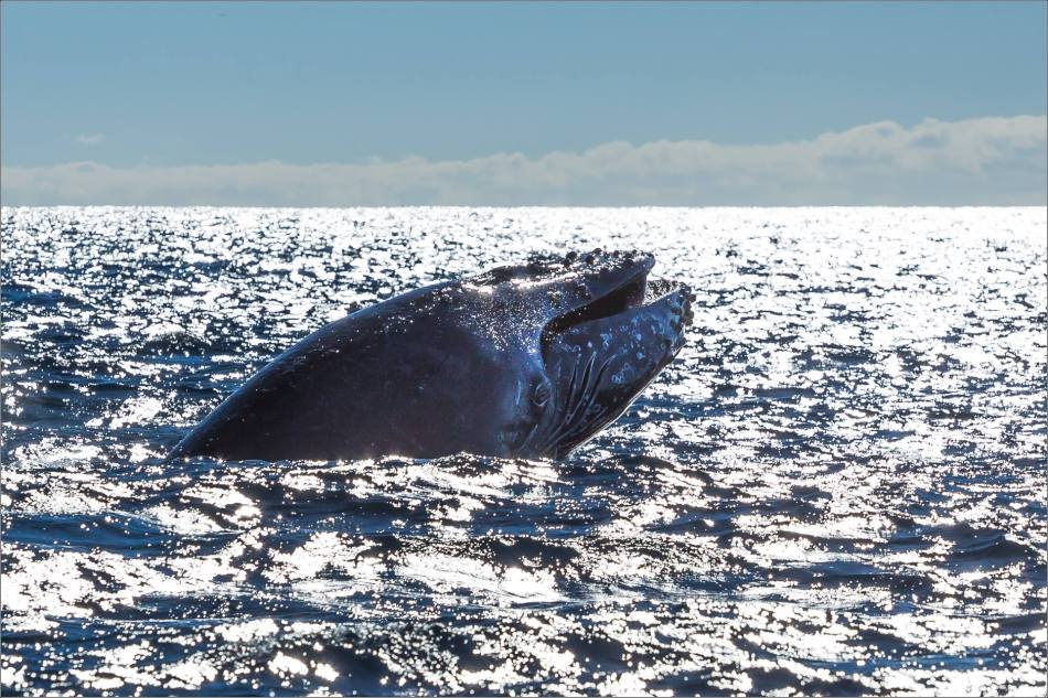Humpback's maw - 2013 © Christopher Martin