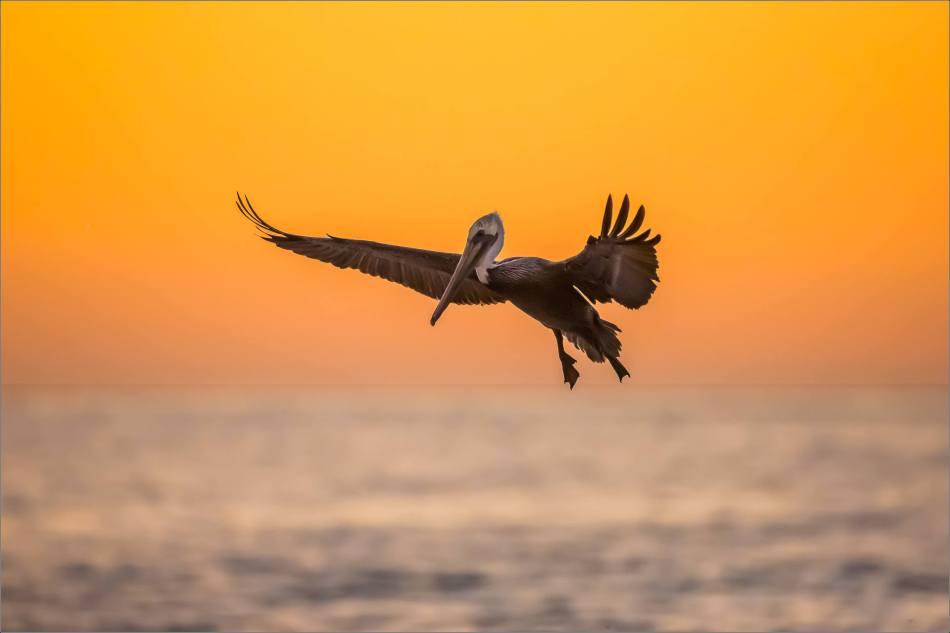 Pre-dawn flight - 2013 © Christopher Martin