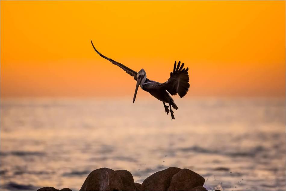 Landing run - 2013 © Christopher Martin