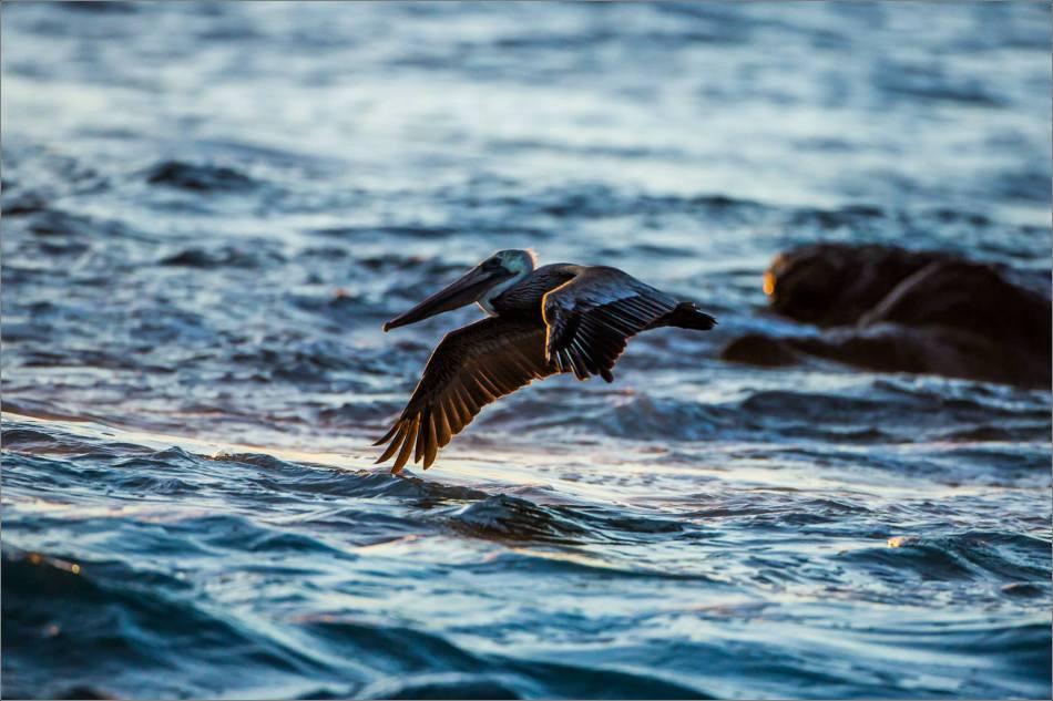 Water flight - 2013 © Christopher Martin