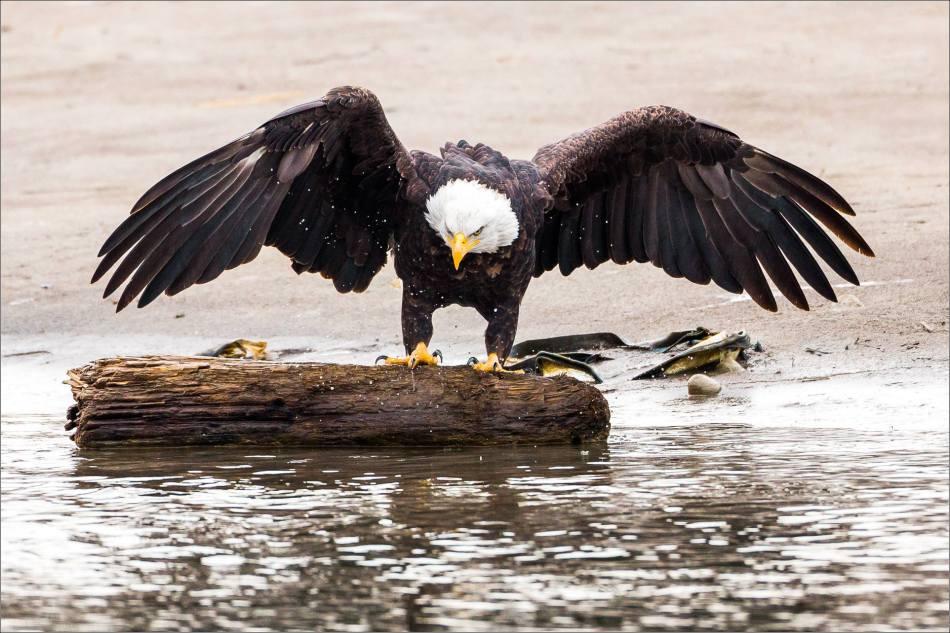 Fish hunting - 2013 © Christopher Martin