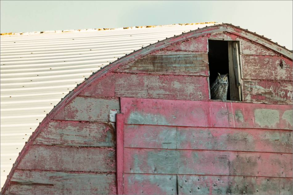 Barn sentinel - 2014 © Christopher Martin