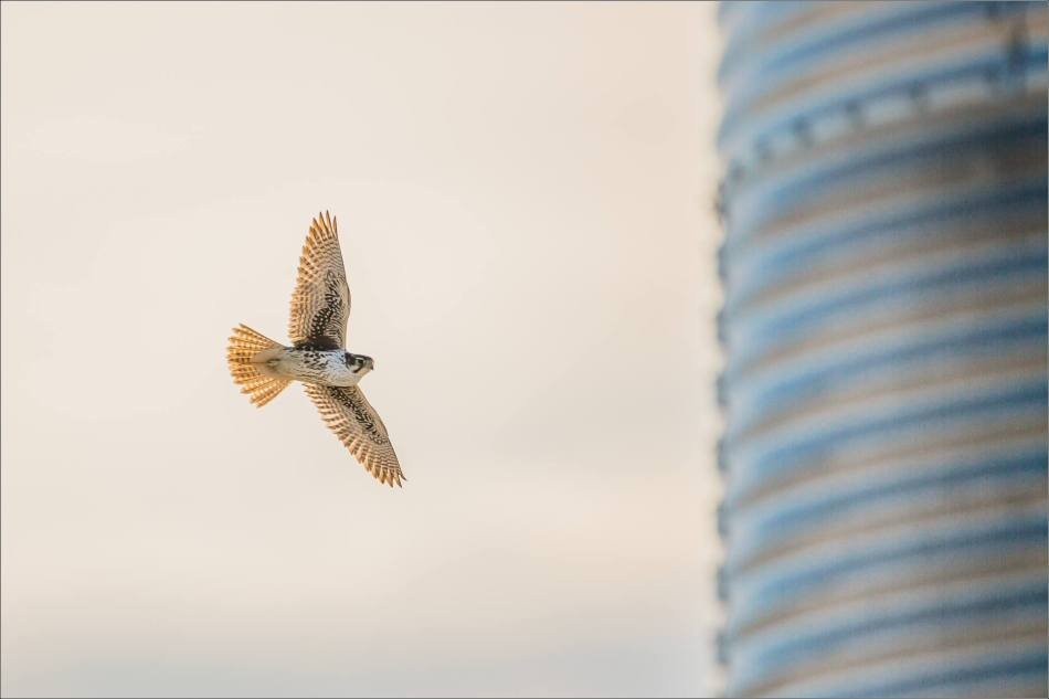 Silo flight - 2014 © Christopher Martin