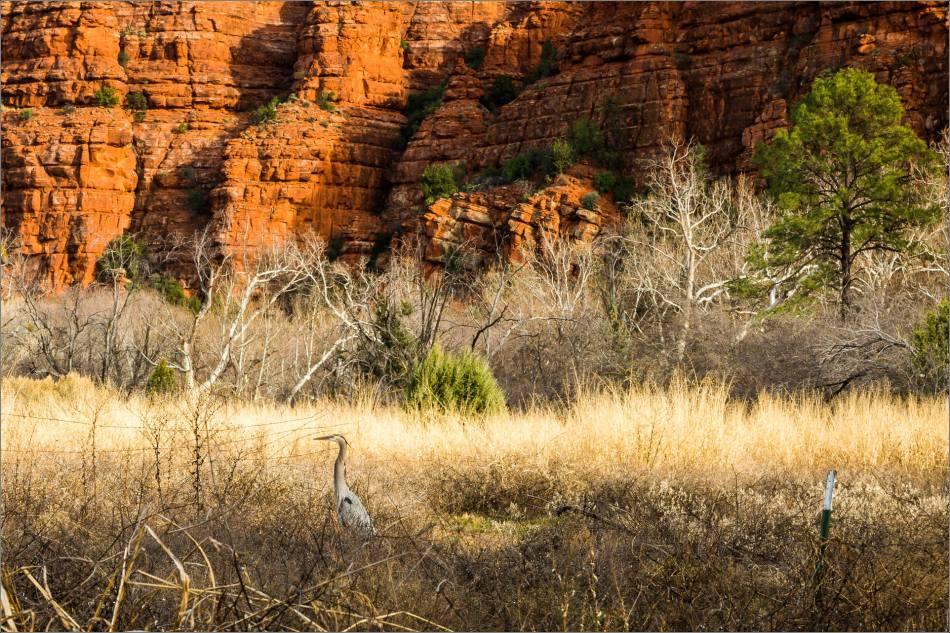 Heron under the red rocks - 2014 © Christopher Martin