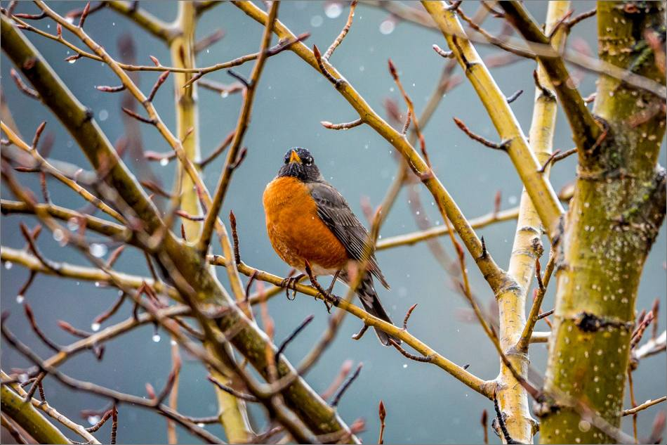 Perched amid the tangled branches - 2014 © Christopher Martin