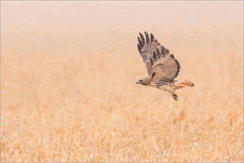 Field flight - 2014 © Christopher Martin