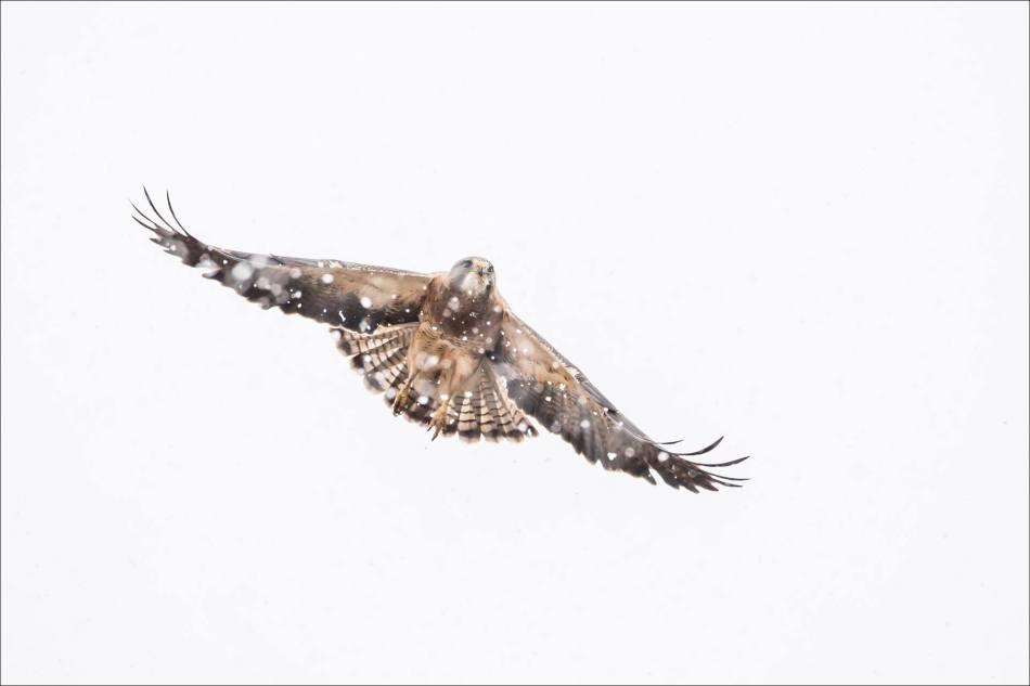 Snow flight - 2014 © Christopher Martin
