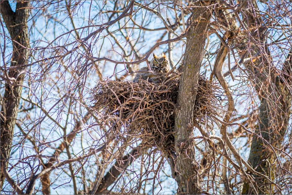 Owl on guard - 2014 © Christopher Martin