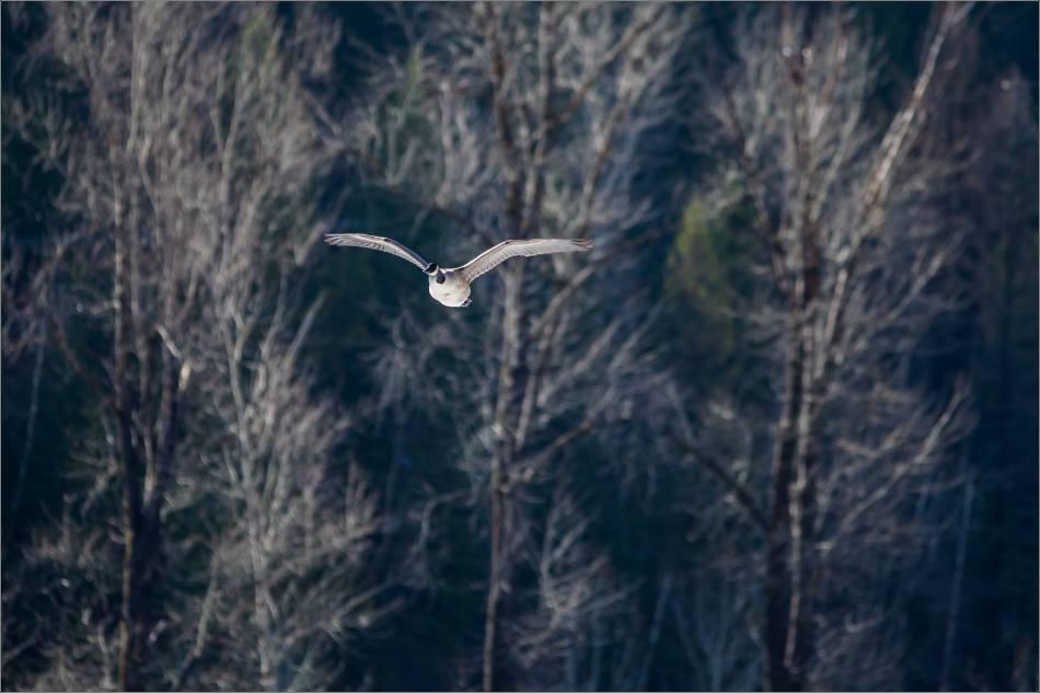 Forest flight - 2014 © Christopher Martin
