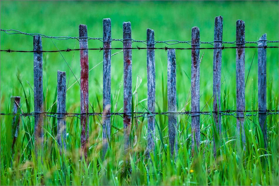 On the fence - 2014 © Christopher Martin