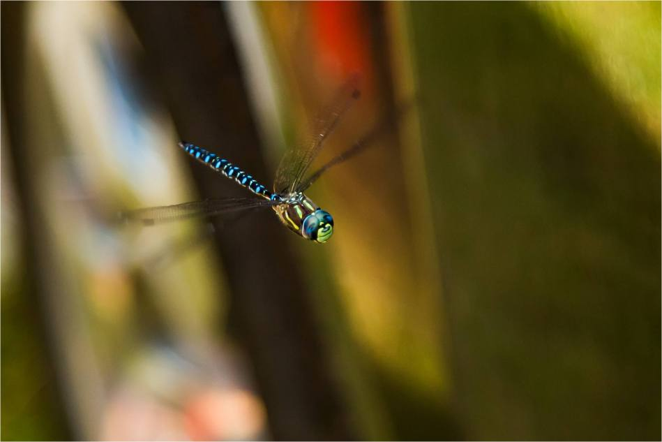 A dragonfly - 2014 © Christopher Martin
