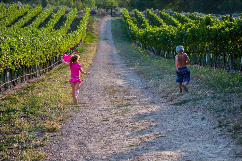 Running through the vineyard - 2014 © Christopher Martin