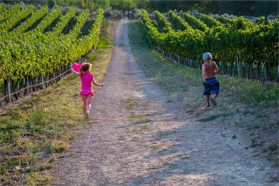 Running through the vineyard - 2014 © Christopher Martin