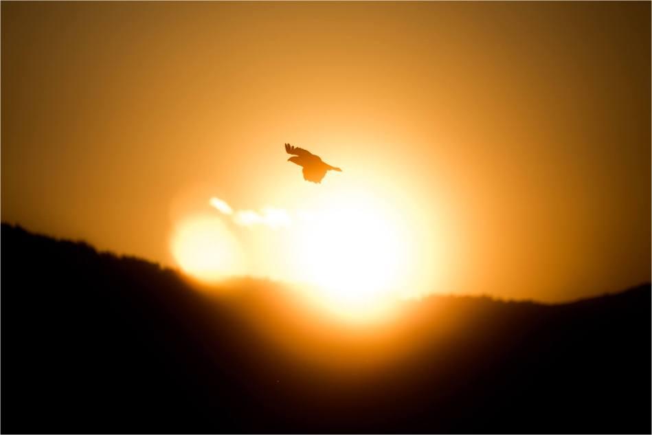 Evening Osprey - 2014 © Christopher Martin