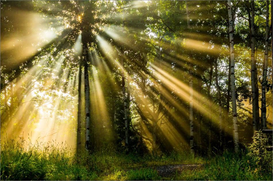Let the sunlight be seen - 2014 © Christopher Martin