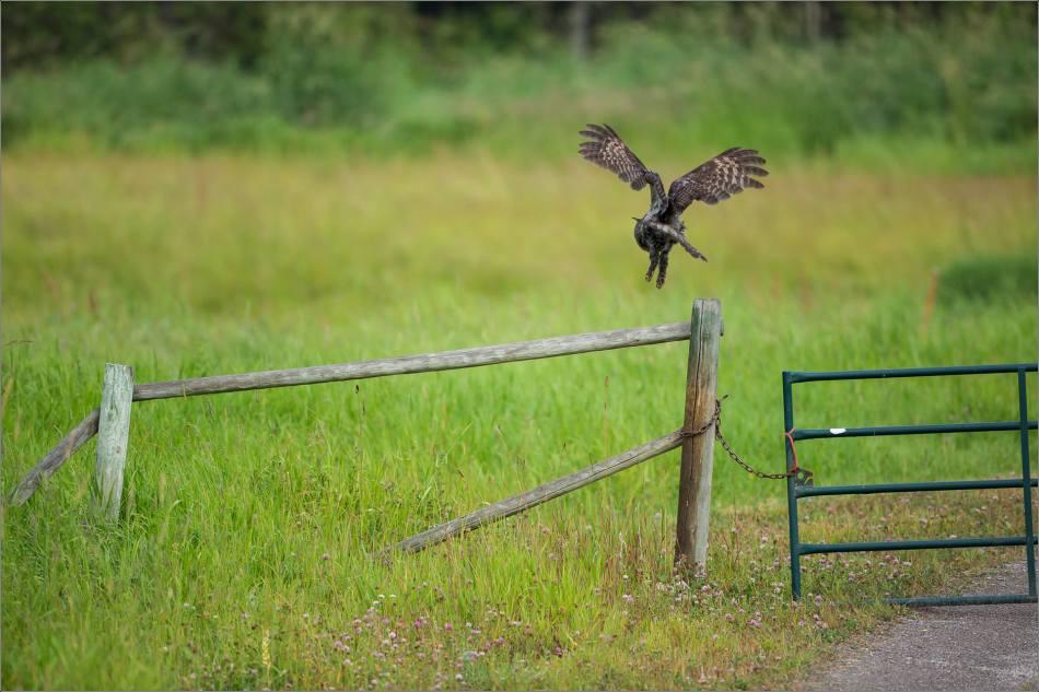 Flying away - 2014 © Christopher Martin
