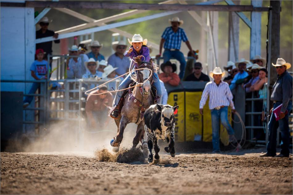 Faith Holyan Roping at the Tsuu T'ina Rodeo - 2014 © Christopher Martin