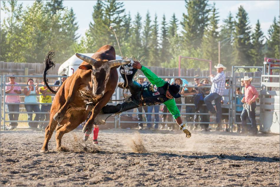 Bull and cowboy win - 2014 © Christopher Martin