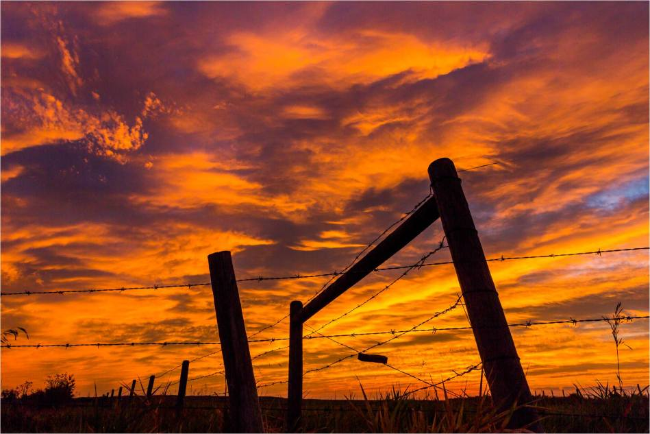 Dawn along the fence line  - © Christopher Martin-2098