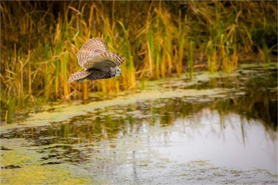 Owl over water - © Christopher Martin-2738