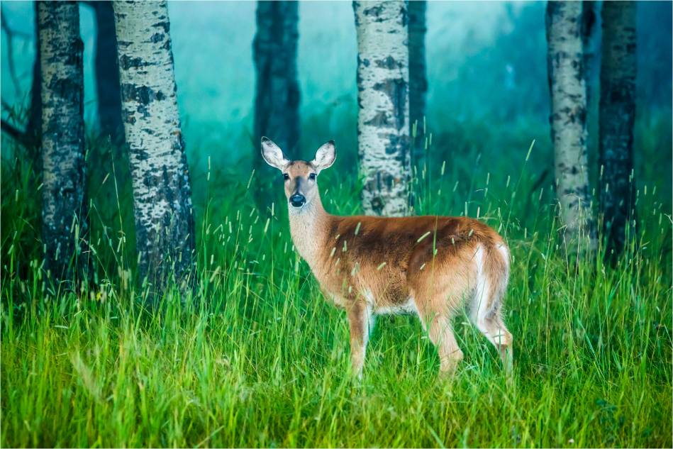 Deer against the mist - © Christopher Martin-7424-2