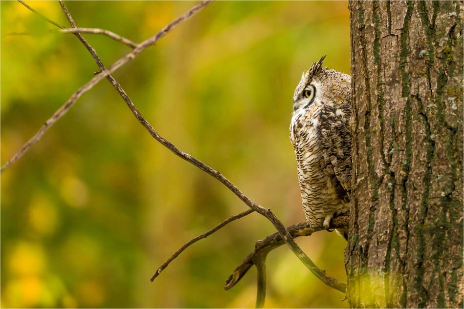 Owl in the woods - © Christopher Martin-3286