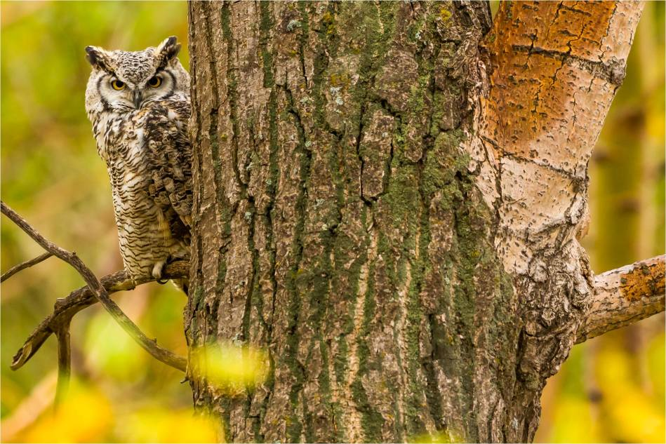 Owl in the woods - © Christopher Martin-3303-2