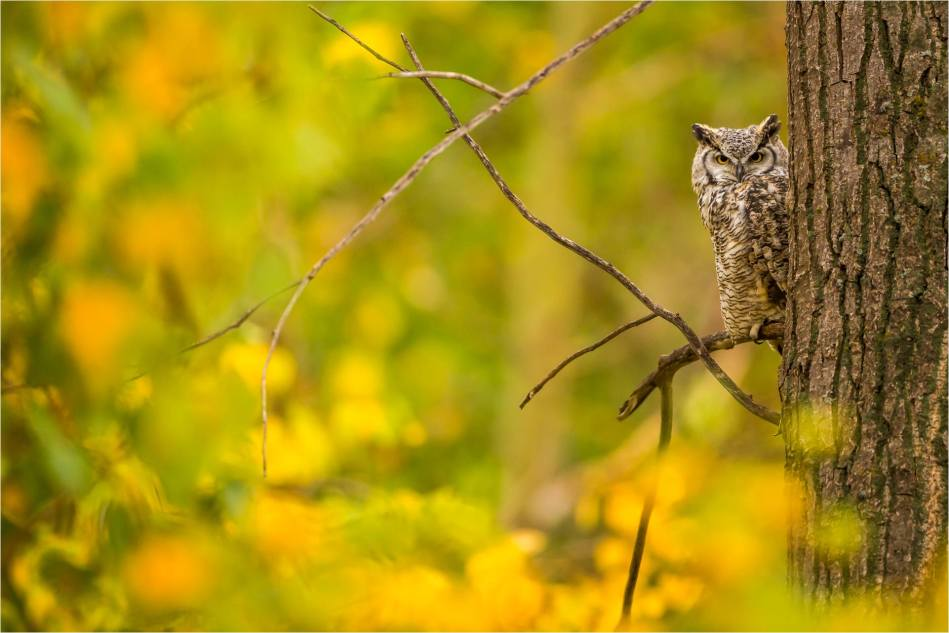 Owl in the woods - © Christopher Martin-3308