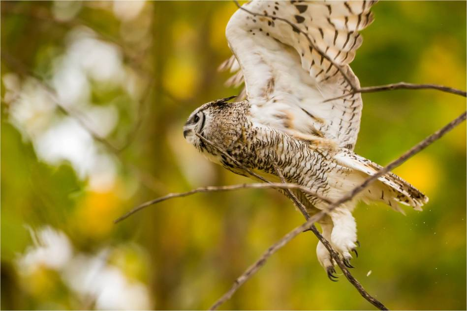 Owl in the woods - © Christopher Martin-3336