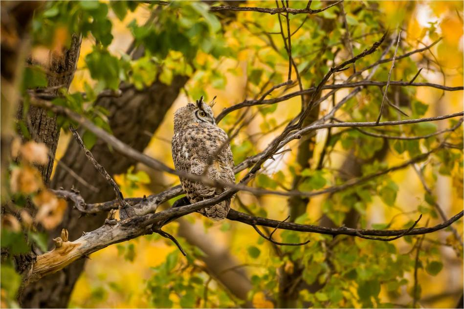 Owl in the woods - © Christopher Martin-3341
