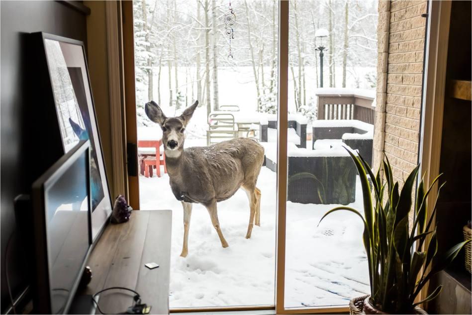 Deckside deer - © Christopher Martin-9445