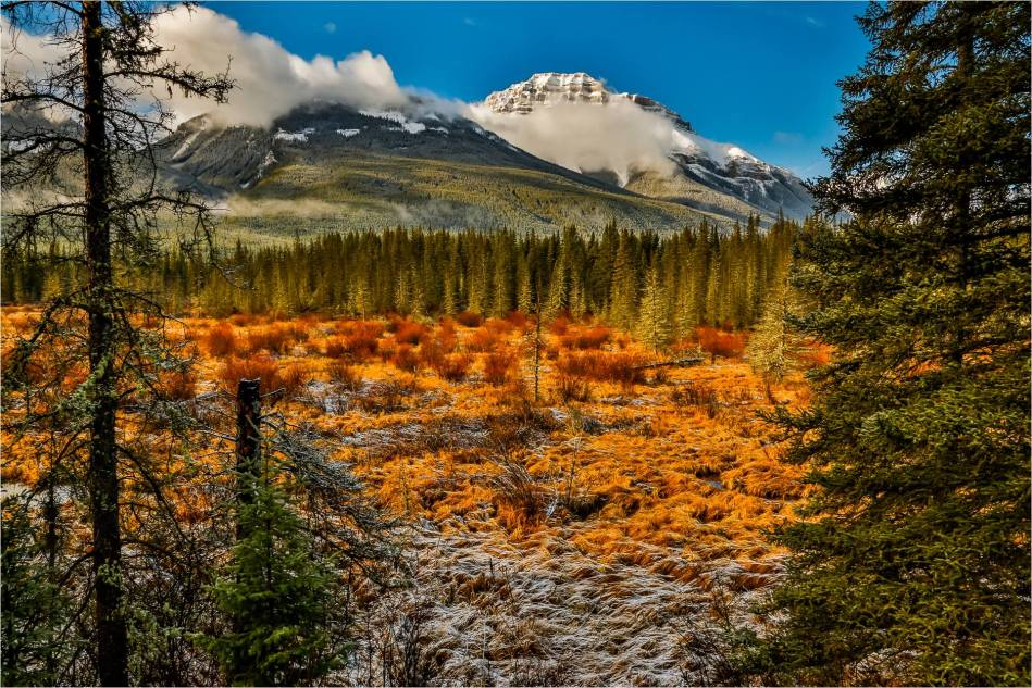 First snow in the Bow Valley - © Christopher Martin-8598