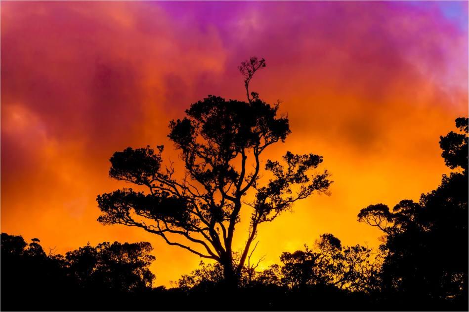 Koke'e silhouette - © Christopher Martin-3154