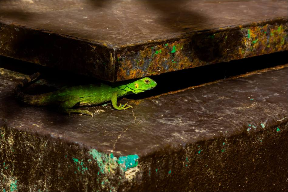 Out of the shadows - © Christopher Martin-4367