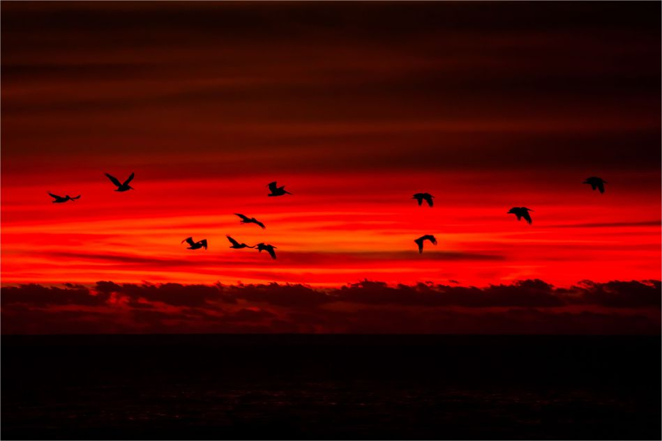 Pelican dawn - © Christopher Martin-9167-2