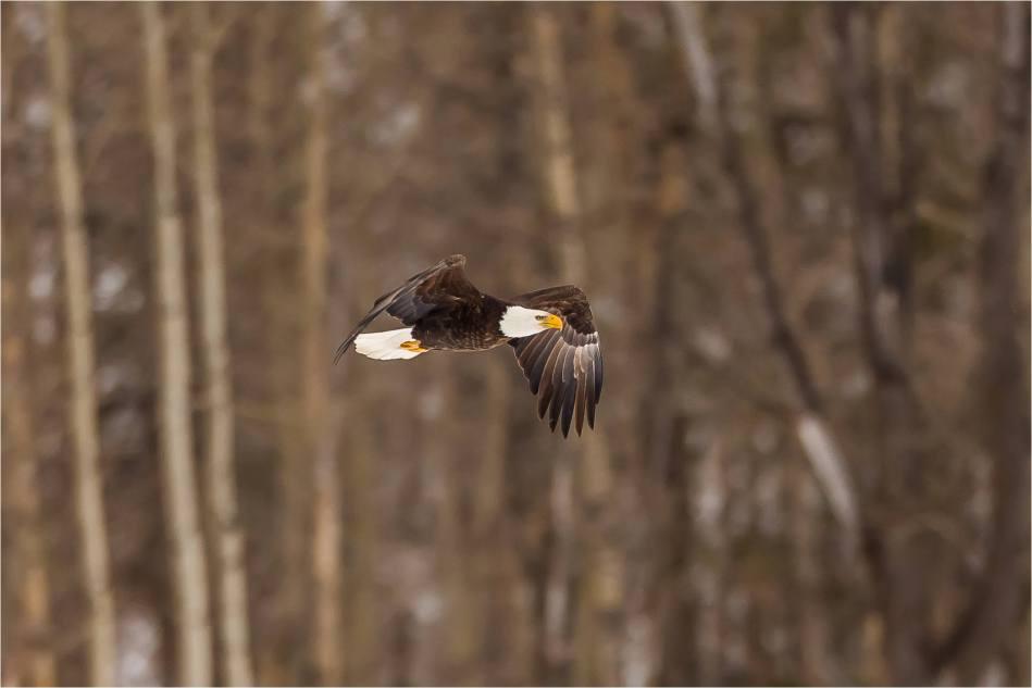 Elk Eagle Valley - © Christopher Martin-0150