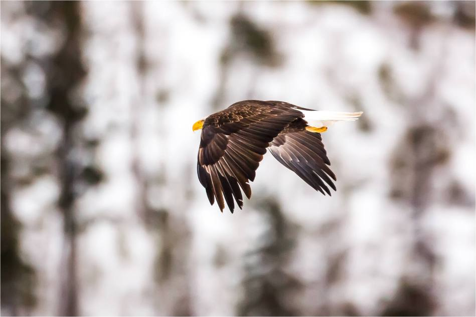 Elk Eagle Valley - © Christopher Martin-0157