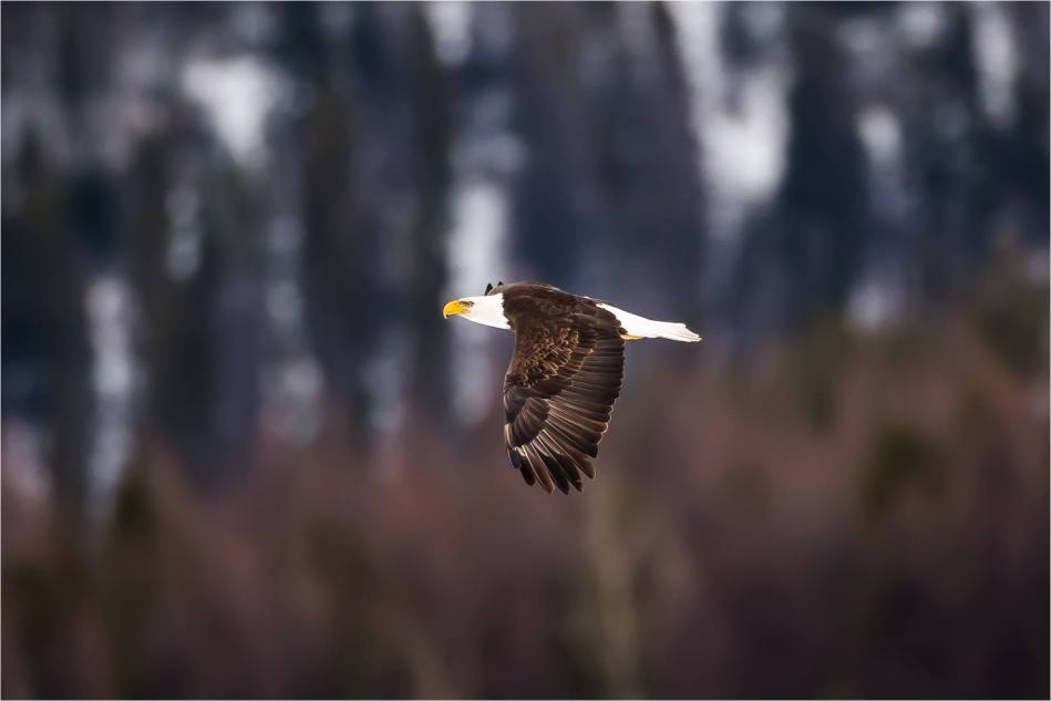 Elk Eagle Valley - © Christopher Martin-0161