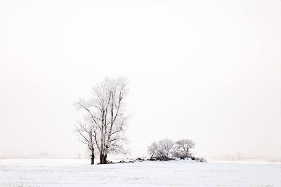 Backlight on the prairie - © Christopher Martin-9940