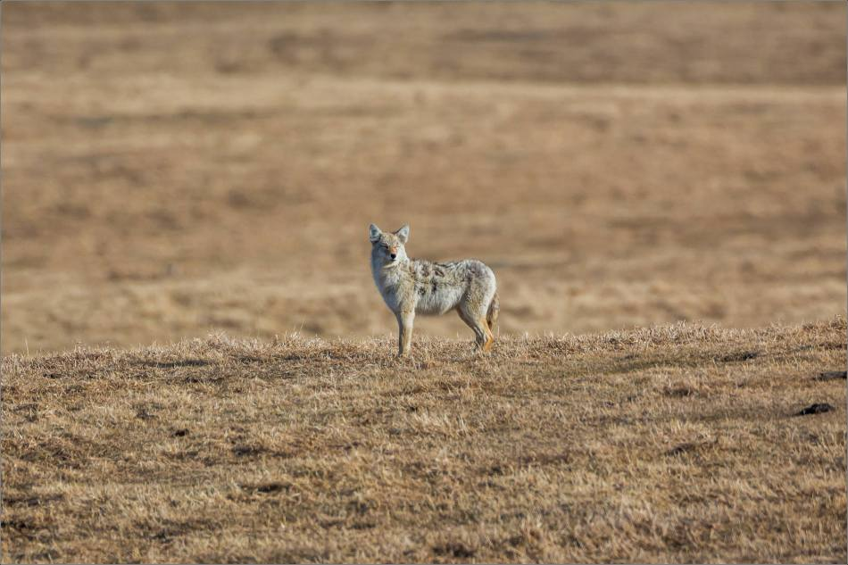 Coyote blink - © Christopher Martin-0661