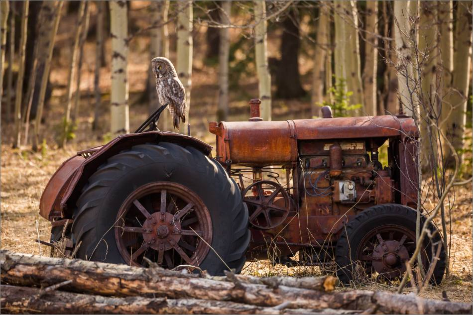 Great gray owl on a tractor - © Christopher Martin-7448