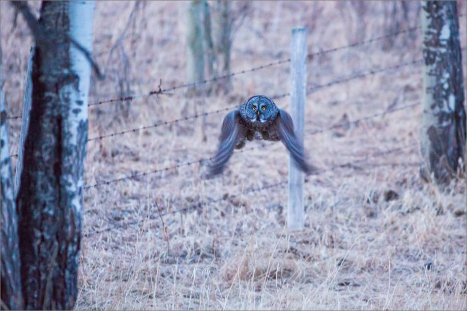 Night owl - © Christopher Martin-3923