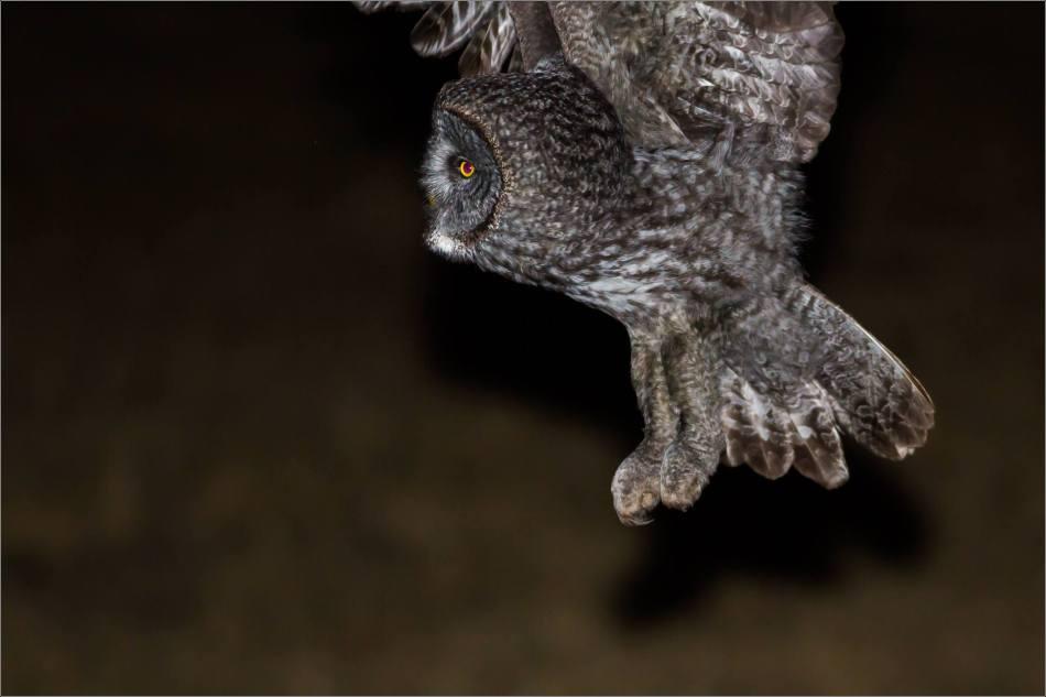 Night owl - © Christopher Martin-4049