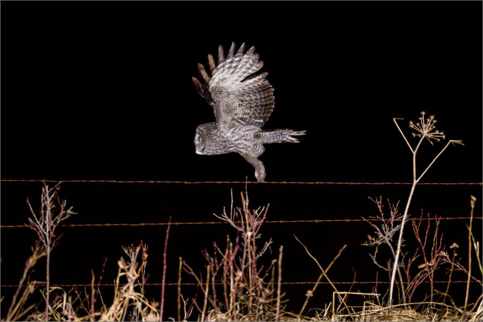 Night owl - © Christopher Martin-4059